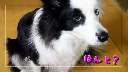 daijoubu6.JPG