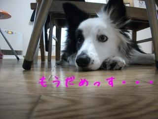 DSCF9694.jpg