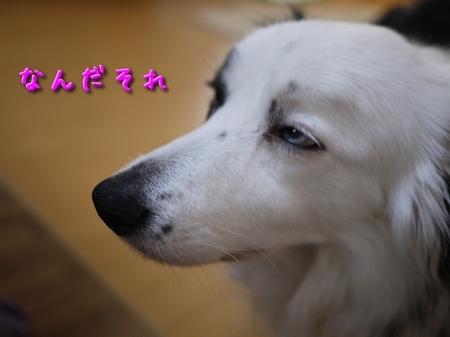 GF1_04.jpg