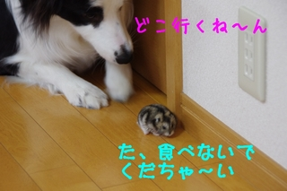 IMGP1114.jpg