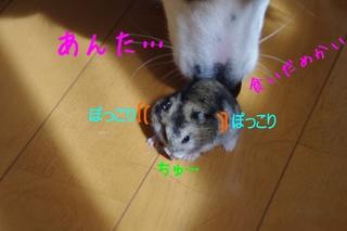 IMGP1287.jpg