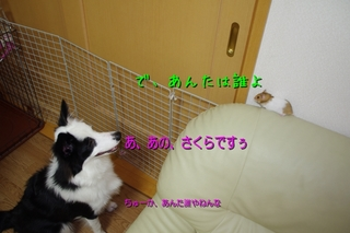 IMGP8917.jpg