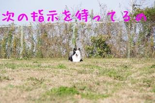 IMGP9862.jpg