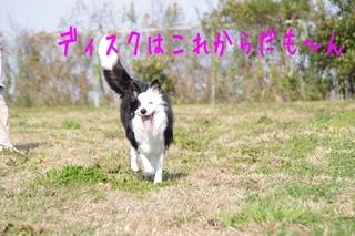 IMGP9875.jpg