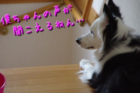 bokuchan01.jpg