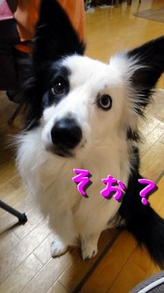 iikoto4.JPG