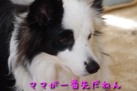 ohayo01.jpg
