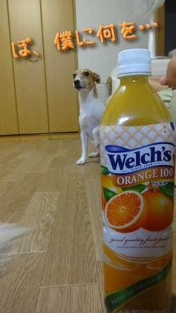 orange07.jpg