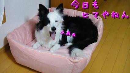 osoji01.jpg