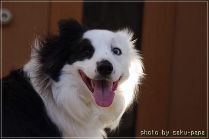 puppy1.JPG