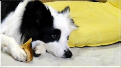 puppy8-1.jpg