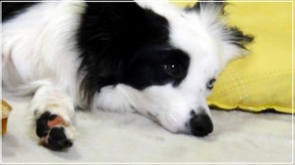 puppy9-1.jpg