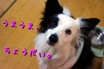 sakubon1.JPG