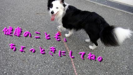 sakubon5.JPG