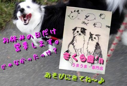 sakubon8.jpg
