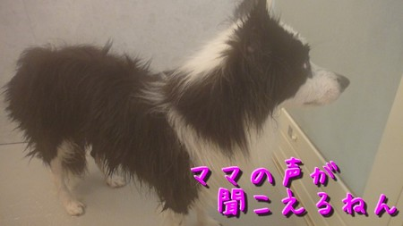 shampoo05.jpg
