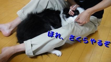 siseki02.jpg