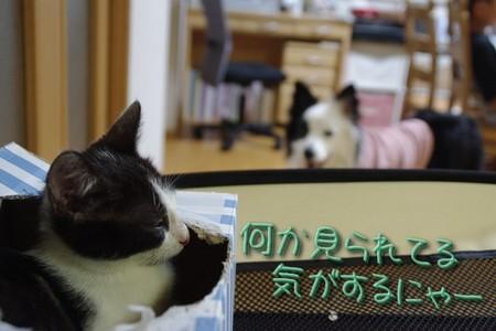 youkai03.jpg