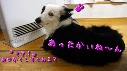 iikoto8.JPG